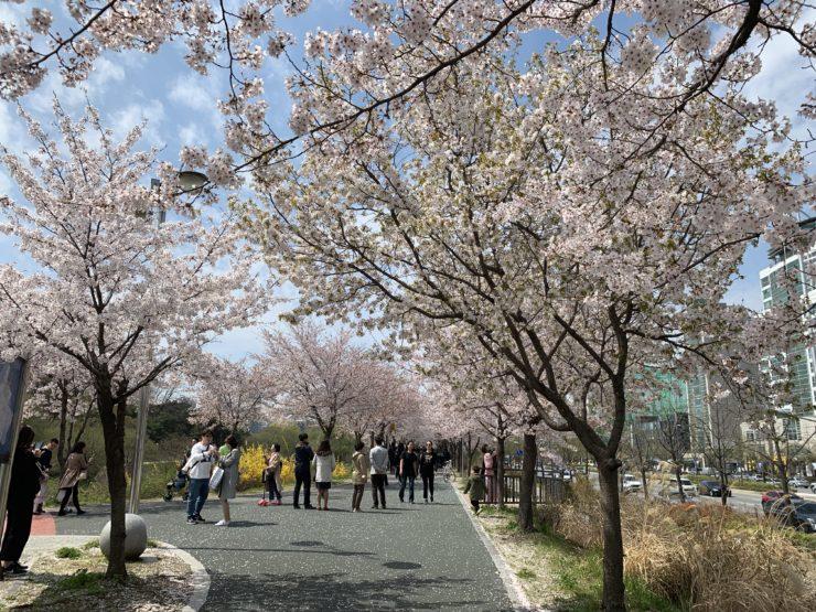 オリンピック公園側の横断歩道を渡った道